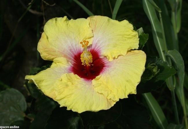 SLIDE 7 Fleur