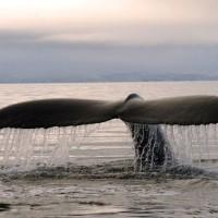 SLIDE3 – CHL  Baleine Terredefeu