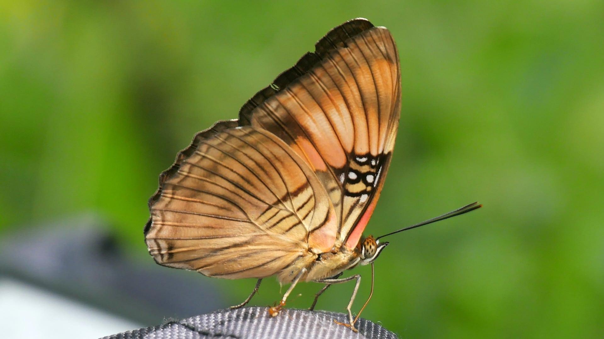Papillon Voyage En Amazonie