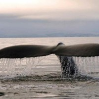 2  Baleine Terredefeu