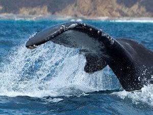 Jour 2- baleines