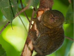 Jour 2- faune amazonie
