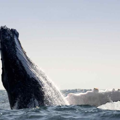 Photo Bas 1  Baleines Bis