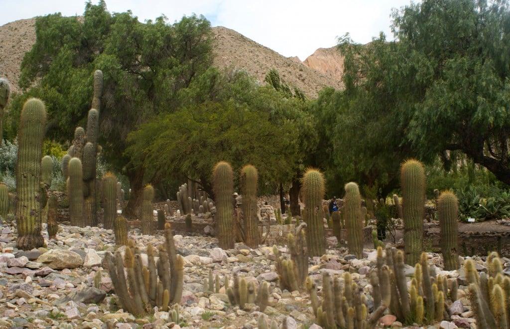 Le jardin botanique d'altitude de Tilcara Photo : Espaces andins