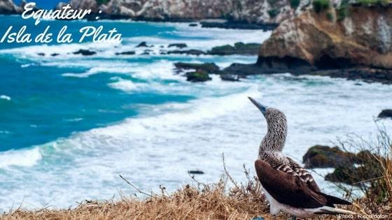 L'île De La Plata, Petite Galápagos