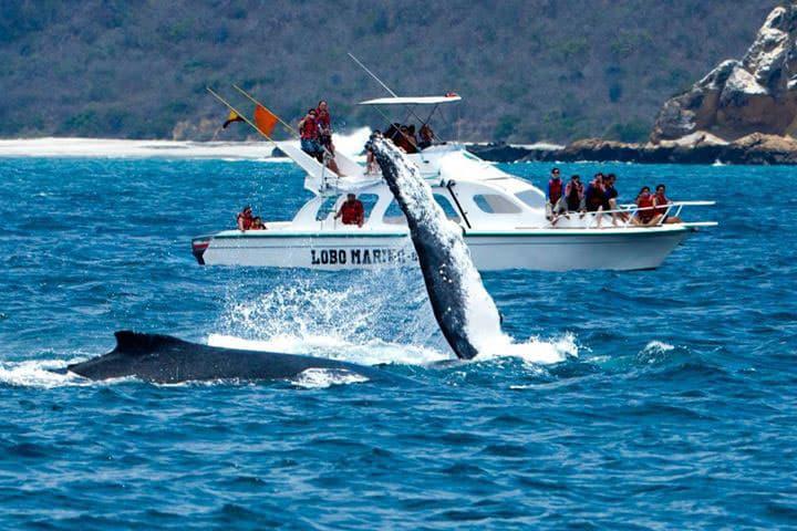 Les baleines à Puerto Lopez / Photo : Visit Ecuador