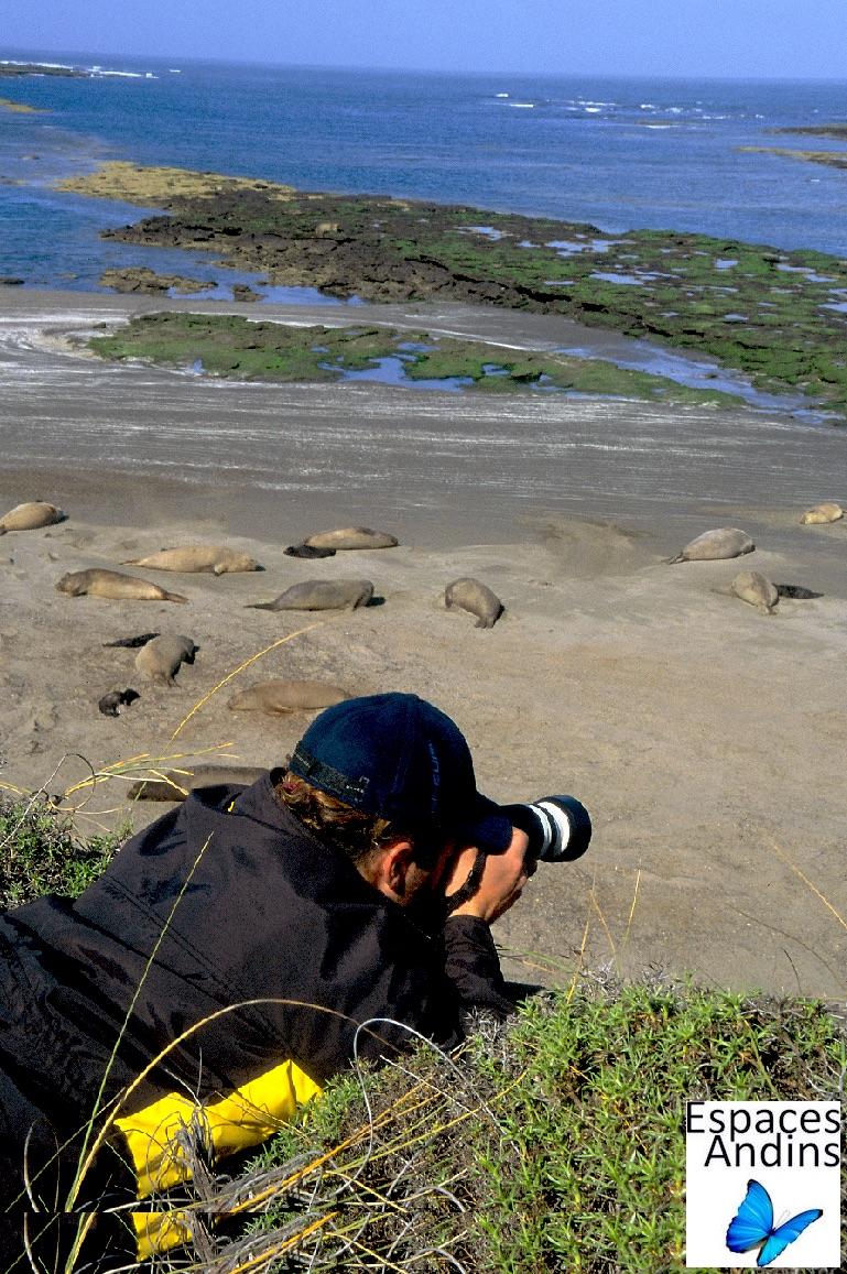 Observation des lions de mer