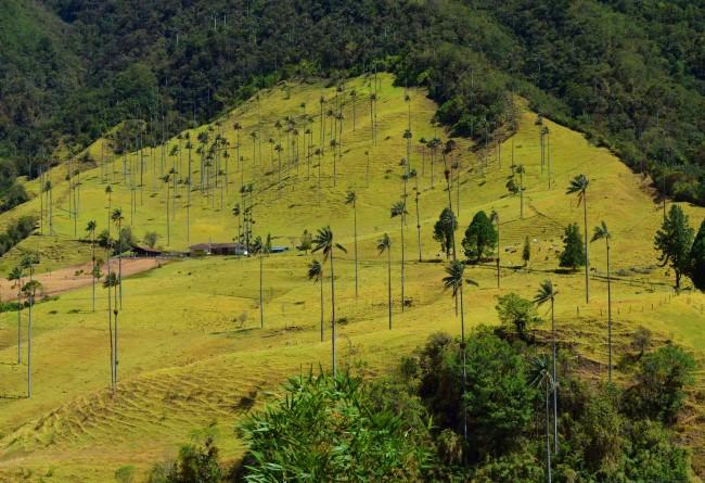 Vallée Du Cocora