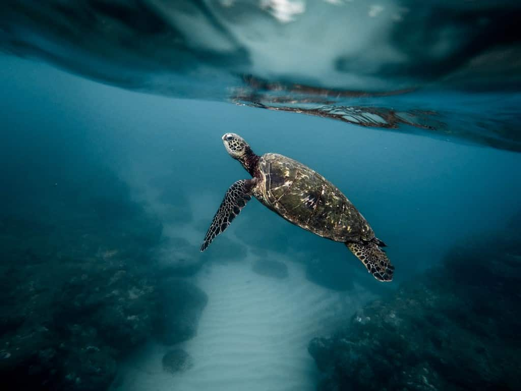 Tortue des Iles Galapagos Photo : Jeremy Bishop