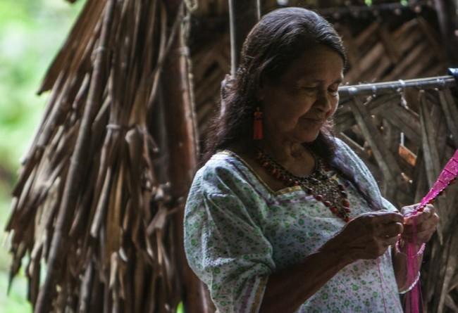 Visite Lors De La Croisière Manatee En Amazonie Equatorienne