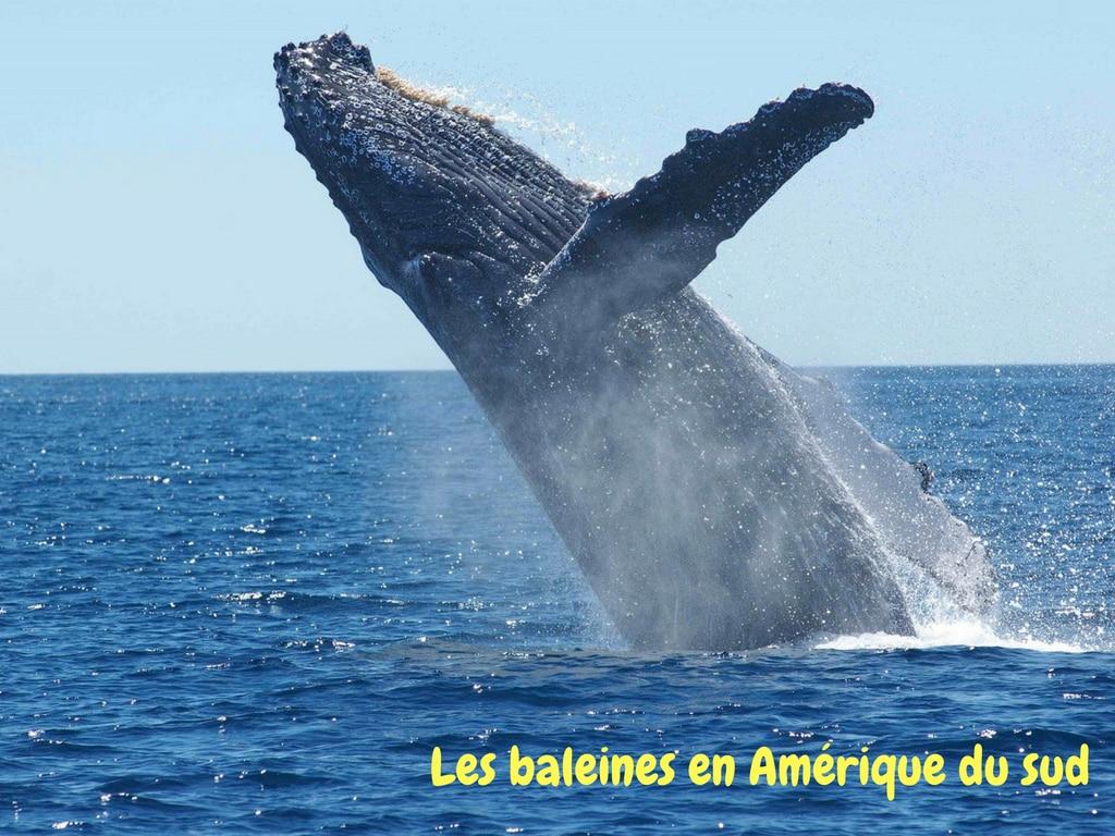 Où Observer Les Baleines Sur Les Destinations Proposées Par Espaces Andins ?