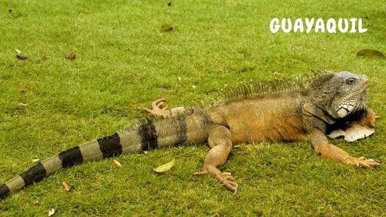 Une Journée à Guayaquil (Equateur)