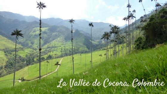 Une étape Dans La Zone Du Café En Colombie : La Vallée De Cocora