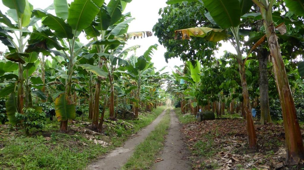 Arrivée à la finca dans la région du café, Colombie