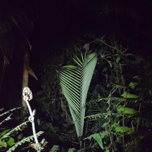 Observation De La Flore Lors D'une Promenade Nocturne Dans La Foret Colombienne