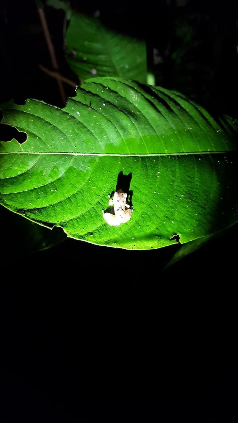 Balade De Nuit Dans La Forêt Colombienne