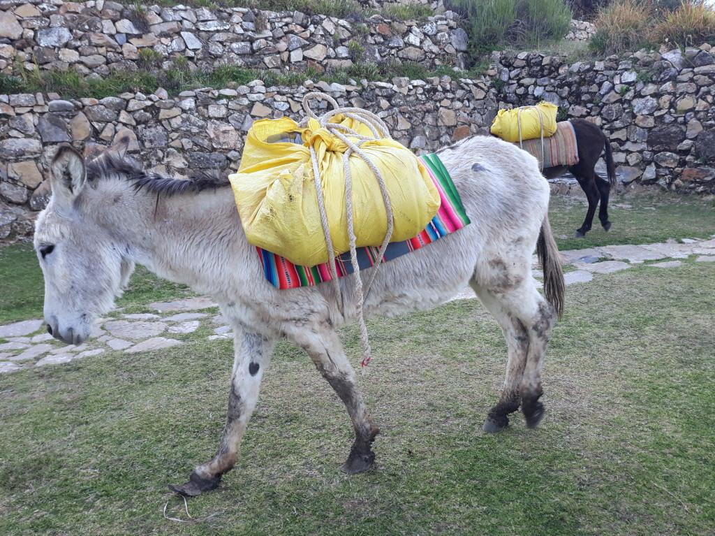 Transport de bagages, marchandises, eau sur la Isla del sol, Titicaca, Bolivie Photo ; Espaces andins