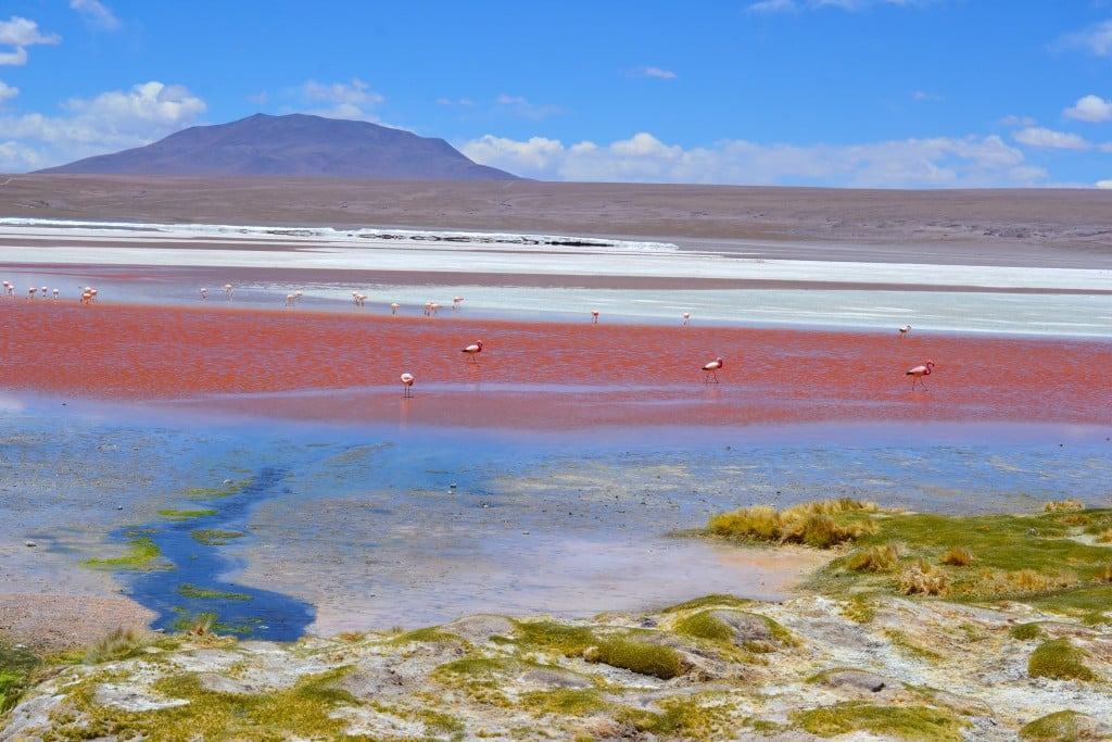 La laguna colorada et les flamants roses en Bolivie Photo : Espaces Andins
