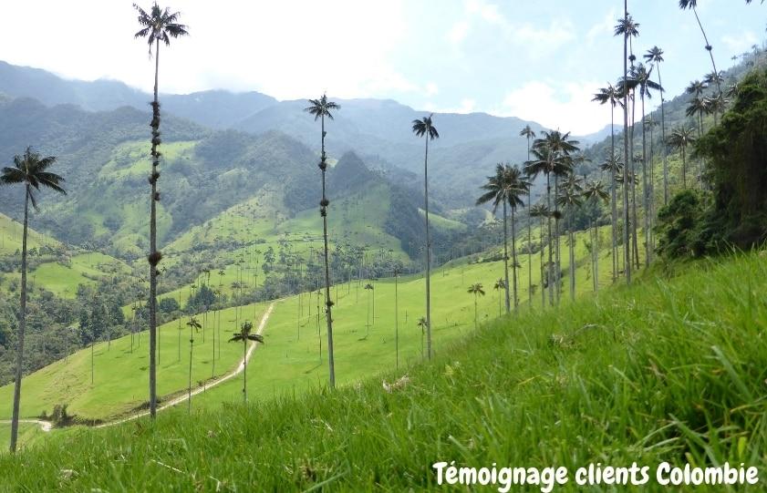 Vallée Cocora Colombie
