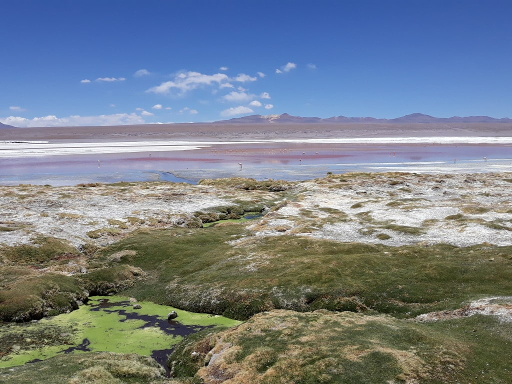 La laguna colorada dans le Sud Lipez en Bolivie // Photo : Espaces Andins