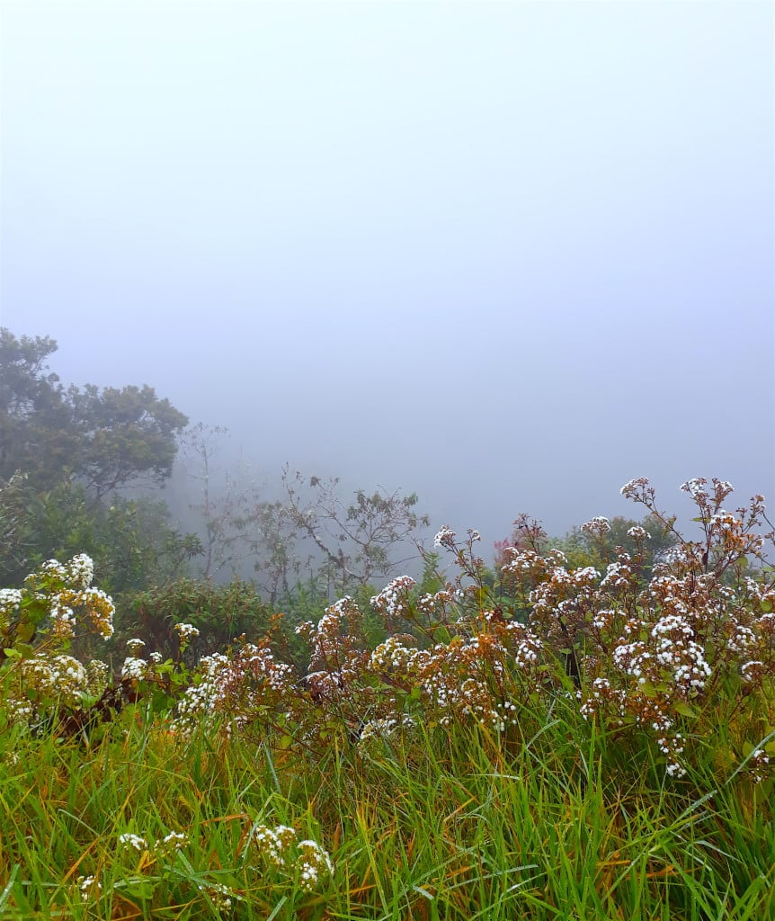 le brouillard, route de la mort, Bolivie