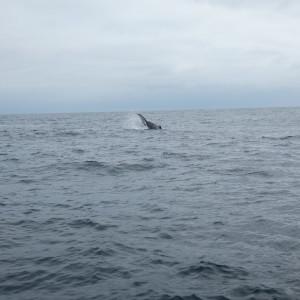 Baleines En Equateur Au Large De La Isla De La Plata