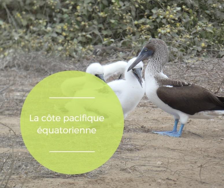 La Côte Pacifique De L'Equateur, Hors Des Sentiers Battus, Si Proche De L'authentique