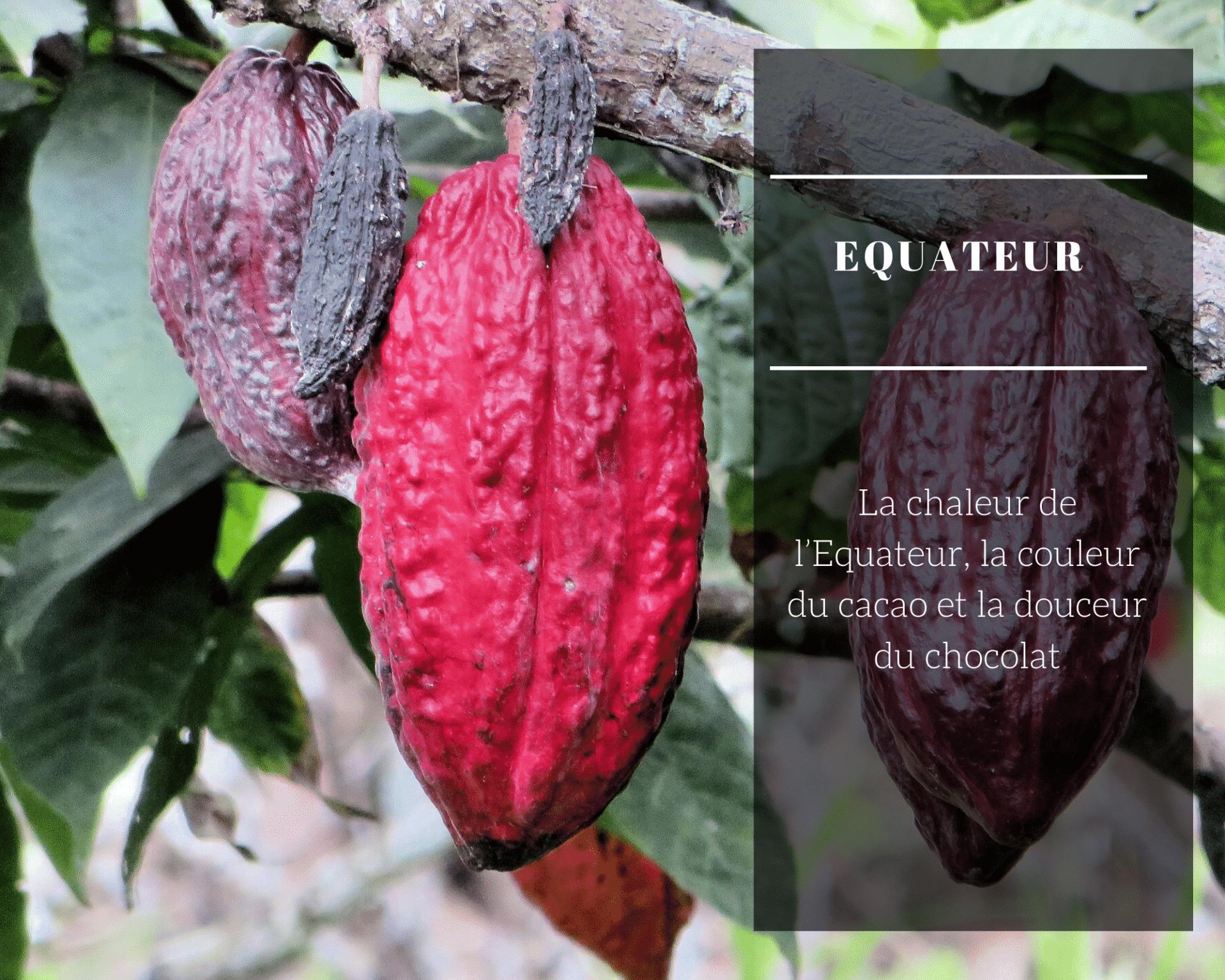 La Chaleur De L'Equateur, La Couleur Du Cacao Et La Douceur Du Chocolat